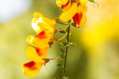 Bariloche - Park Llao Llao - auch hier: Frühling ;-)