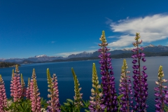 Straße der sieben Seen - Provinz Neuquén in Argentinien - erinnert ein wenig an Neuseeland