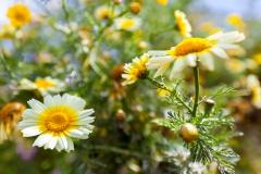 Noch mal Frühling :-)