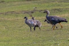 Falklandinseln - Rund um Stanley -