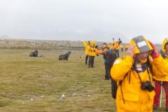 Salisbury Plain: Hände nach oben um Seebären abzuschrecken