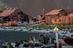 Stromness Harbour: alte Walfängerstation