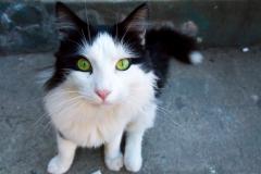 Auf den Straßen leben viele herrenlosen Katzen und Hunde, aber alle mega friedlich.