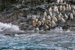 Point Wild, Elephant Island: Zügelpinguine