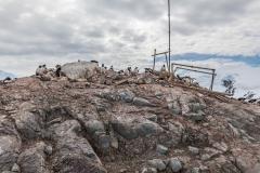 D'Hainaut Island: Pinguinkolonie