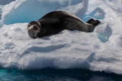 Cierva Cove: Leider ohne Pinguin ;-)