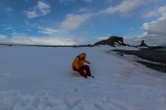 Half Moon Island: Sitzen im Schnee ;-)