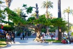 Schöner Baum im Park :-)