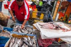 Frischer Fisch auf dem Markt von Valparaiso.