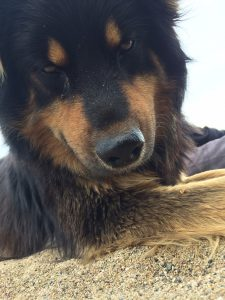 Unser Wachhund am Strand ;-)