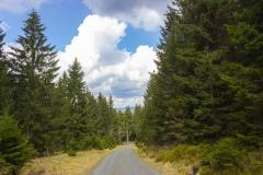 Harz - Wanderweg in Richtung Wolfswarte