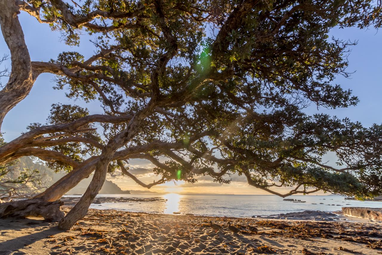 Neuseeland - Nordinsel - Ostküste - vor Goat Island