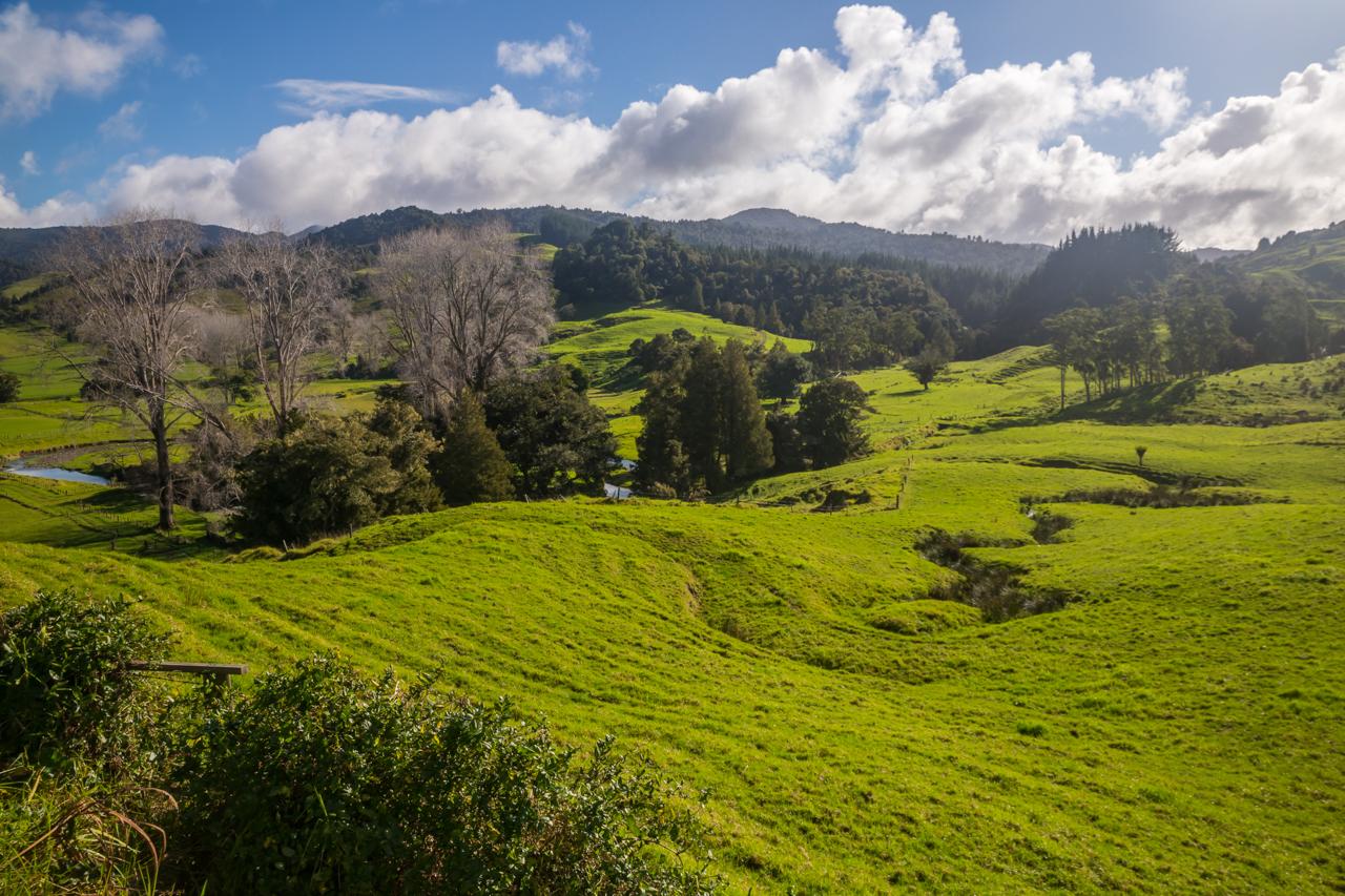 Neuseeland - Nordinsel - Westküste - am Campingplatz Traveller Hut