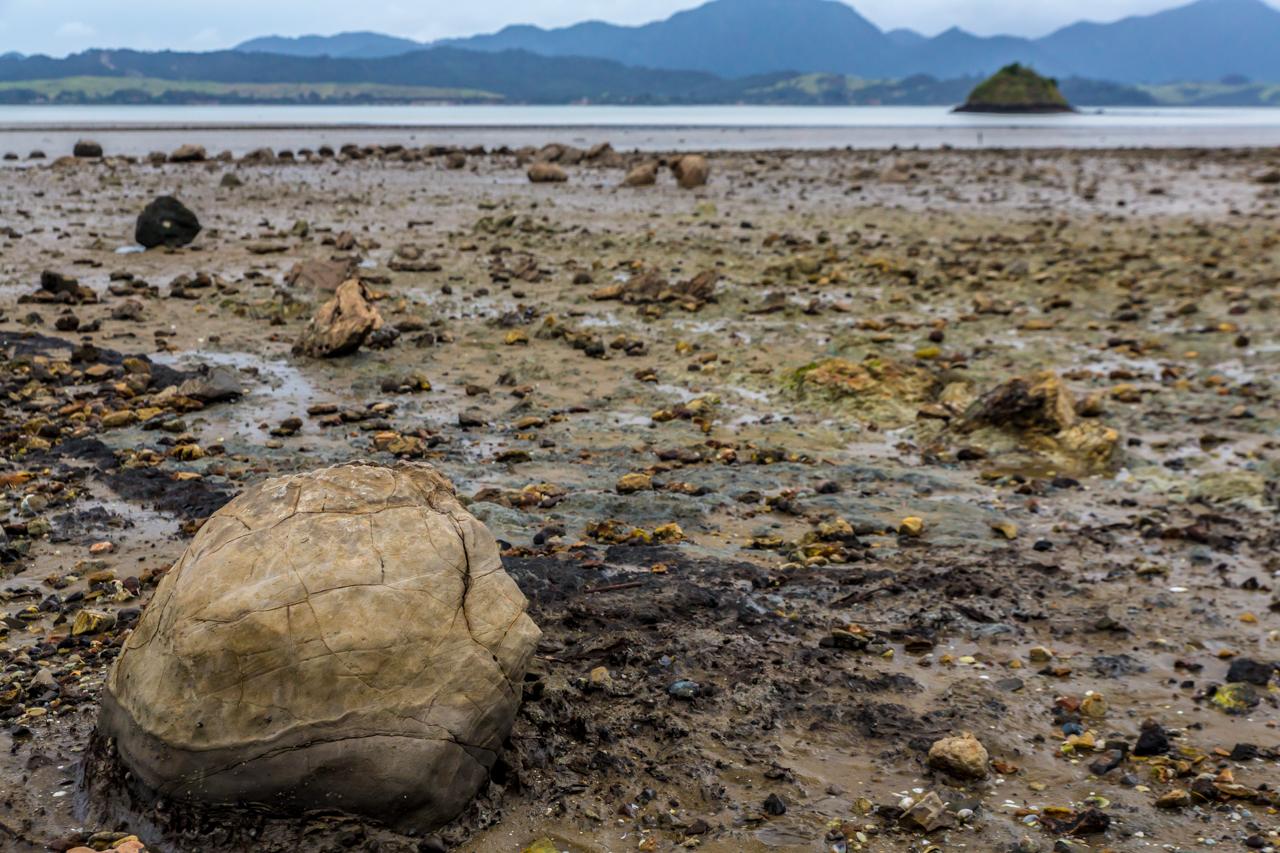 Neuseeland - Nordinsel - Westküste - Koutu Boulders