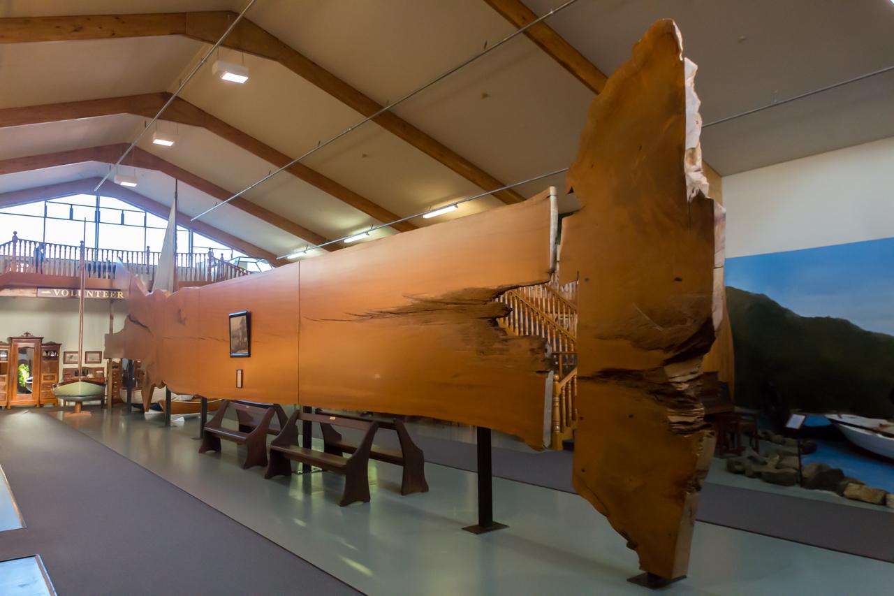 Neuseeland - Nordinsel - Kaurimuseum in Matakohe - die Größe eines Kauribaumes