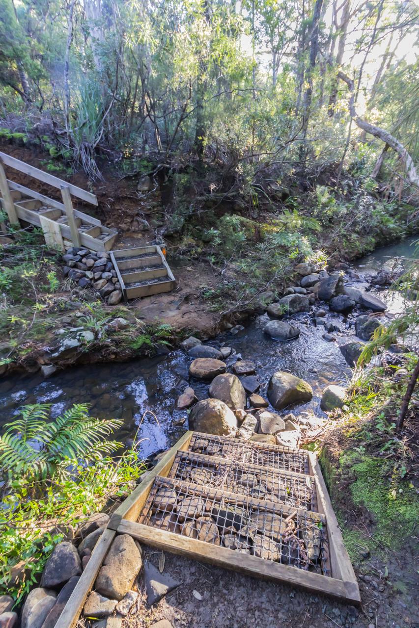 Neuseeland - Great Barrier Island - Wanderweg nach Medlands