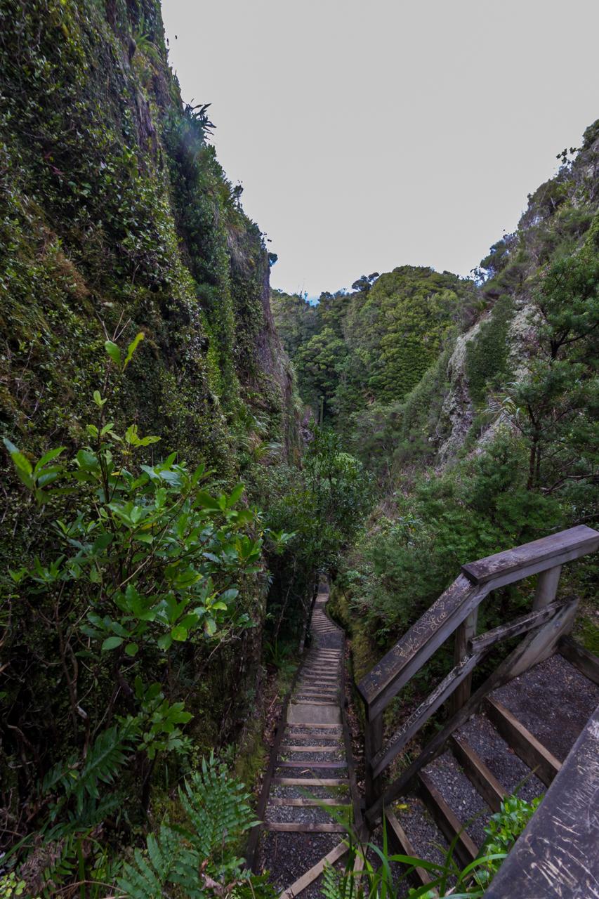 Neuseeland - Great Barrier Island - Windy Canyon