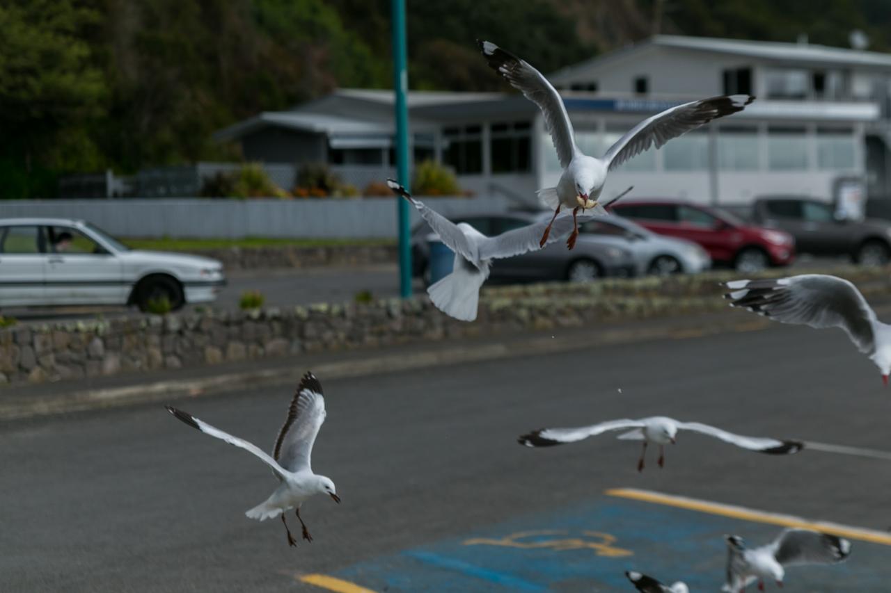 Neuseeland - Nordinsel - Ostküste - Whakatane