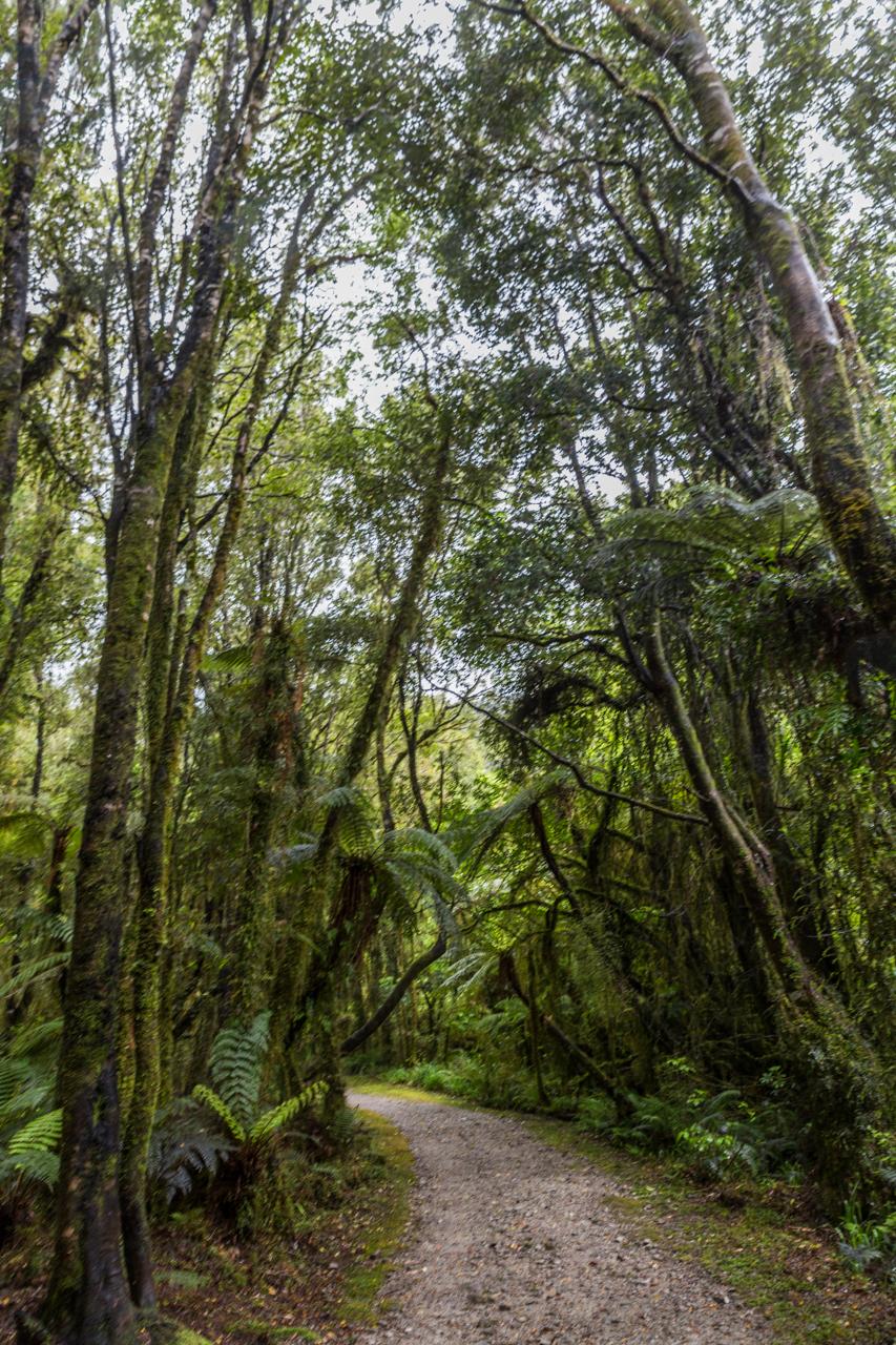 Neuseeland - dorothy creek