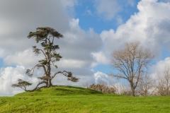 Auckland - Cornwall Park und One Tree Hill
