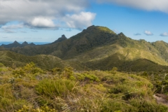 Neuseeland - Great Barrier Island - Palmers Track zu Mount Hobson