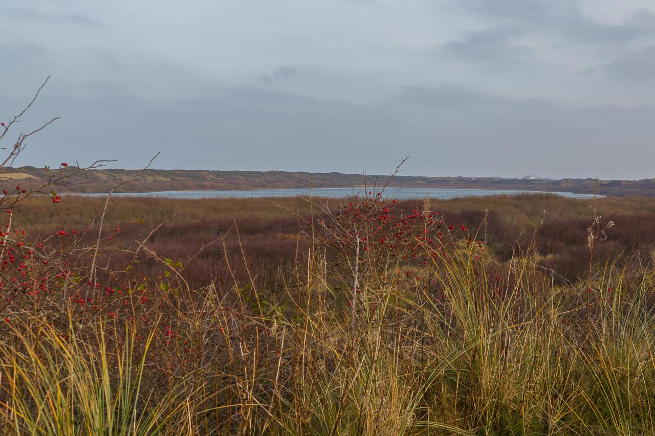 Insel Juist - Hamersee