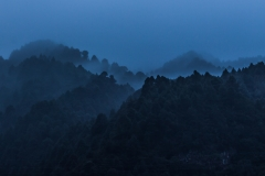 La Palma - Nebel im Wald von Barlovento