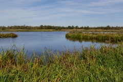 Niederlande - Nationalpark De Alde Feanen