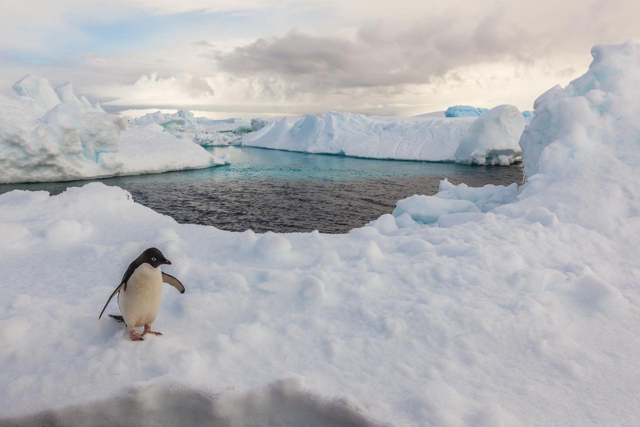 Antarktische Halbinsel