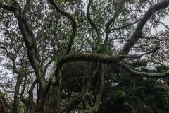 Auckland - Eden Park