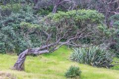 Neuseeland - Nordinsel - Ostküste - Helena Bay