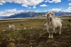 El Calafate: auf dem Weg zum Perito Moreno Gletscher