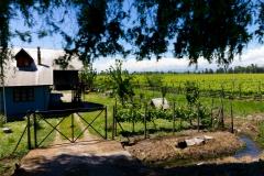 Rund um Talca und Molina gibt es viele Weingüter.