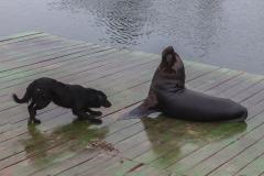 Der Hund wollte mit dem Seelöwen spielen.
