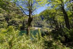 Im Nationalpark Huerquehue - mitten im Araukarienwald