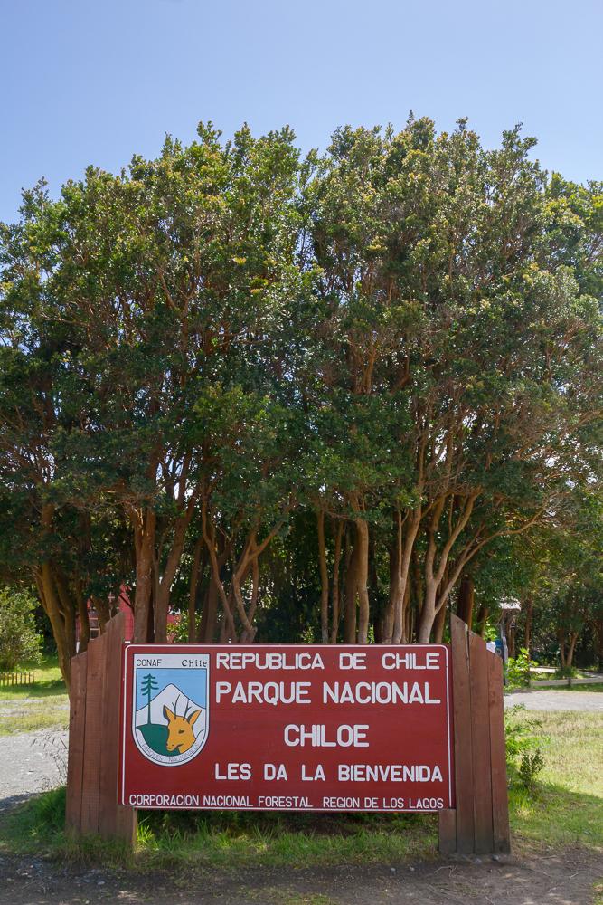 Nationalpark Chiloé - wieder ein schöner Wald