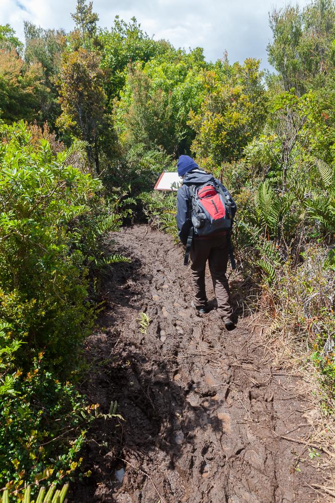 Nationalpark Chiloé - Wege durch den Schlamm