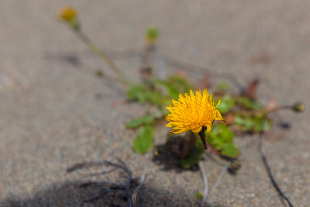 Chepu - und an manchen Stellen ist auch hier Frühling
