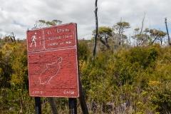 Nationalpark Chiloé - der Pfad El Tepual
