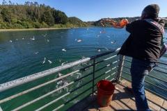 Puerto Montt - hier werden Fischreste ins Wasser gewurfen
