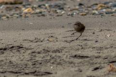 Magellanstraße - bei dem Wind laufen nicht nur Menschen schräg