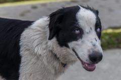 Ushuaia - auch wenns richtig kalt ist: Straßenhunde gibts auch hier