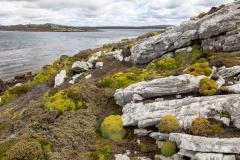 Falklandinseln - Rund um Stanley