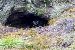 Falklandinseln - Rund um Stanley - Pinguine verstecken sich ..