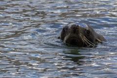 Leith Harbour: die Tiere kommen zurück