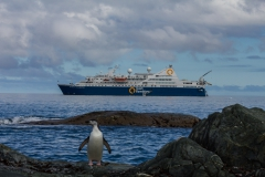 Chinstrap Camp, Elephant Island: Pinguin vor der Ocean Diamond