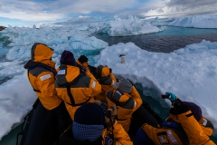 Kinnes Cove: der Pinguin kam immer näher