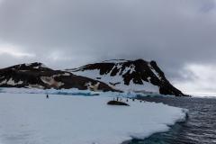 Kinnes Cove: Weddellrobbe auf Eisscholle
