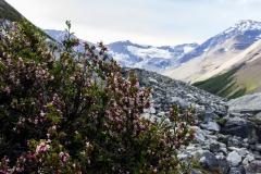 Torres del Paine: es kam auch ein wenig Vegetation dazu